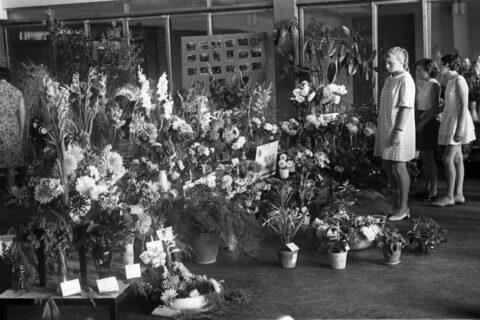 На областной выставке цветов во дворце судостроителей