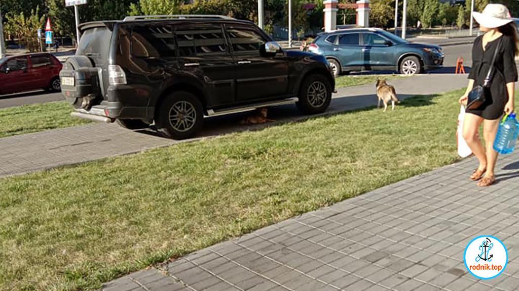 Жительница Намыва сетует на бродячих псов
