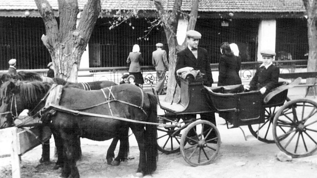 Покидая Николаев, немцы оставили в зоопарке только пустые клетки