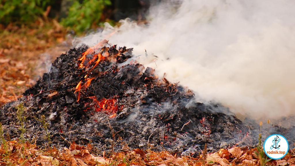 Любящих жжёную листву николаевцев ждёт наказание