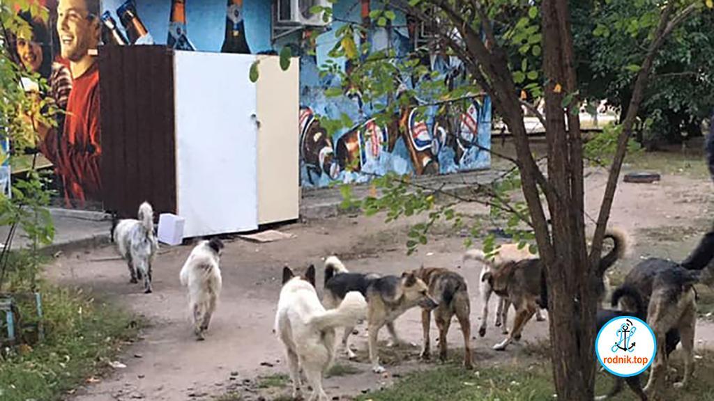 В Николаеве сообщили о массовом скоплении собак возле трёх учебных заведений