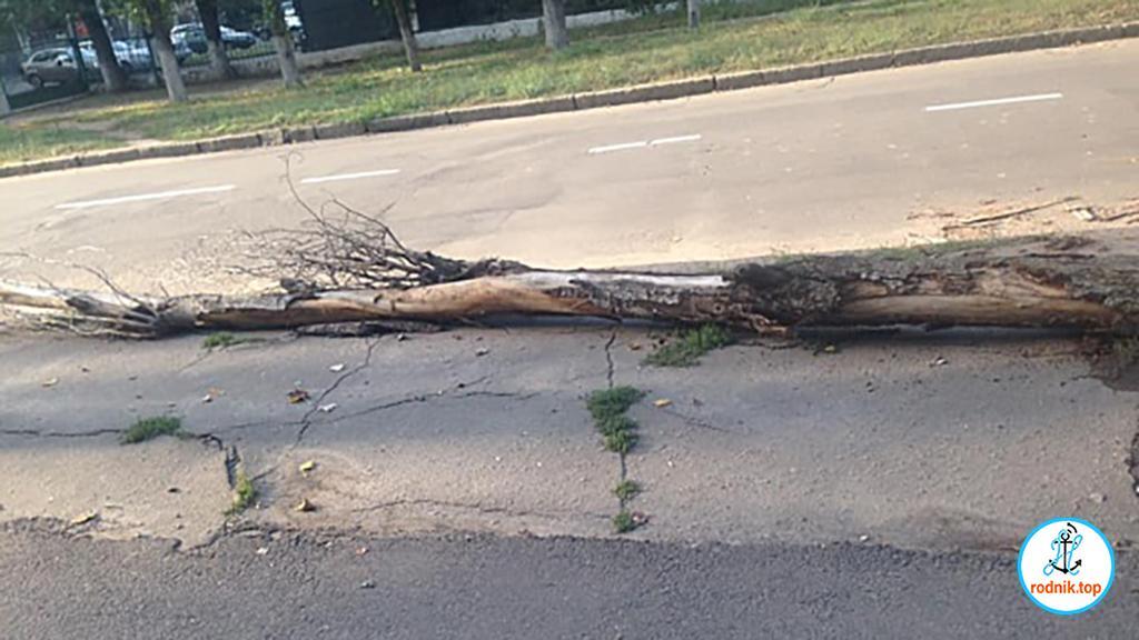 В Николаеве на проезжую часть упало дерево