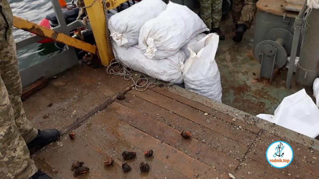 На Николаевщине незаконно выловили 16 тысяч рапанов