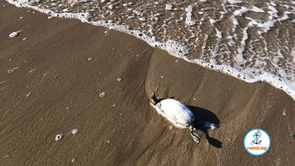На очаковском побережье замечена грязная вода и трупы птиц