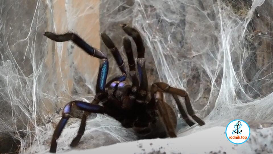 В Николаеве можно посмотреть на опасных пауков и насекомых